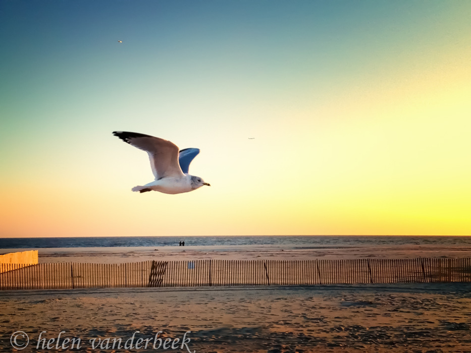 photoblog image A Fly-by Seagull